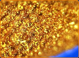 Macro de fleur de camomille après 5 minutes de vaporisation